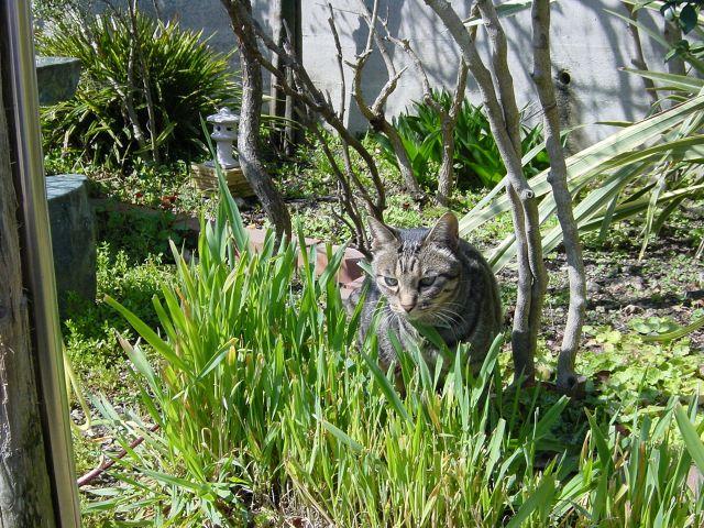 庭にやってくる猫
