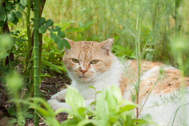 庭にいすわる猫