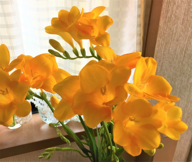 フリージアの切り花