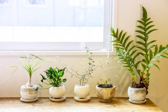 観葉植物の冬場の管理