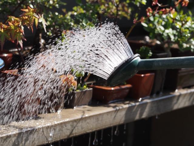 鉢植え植物の水やり
