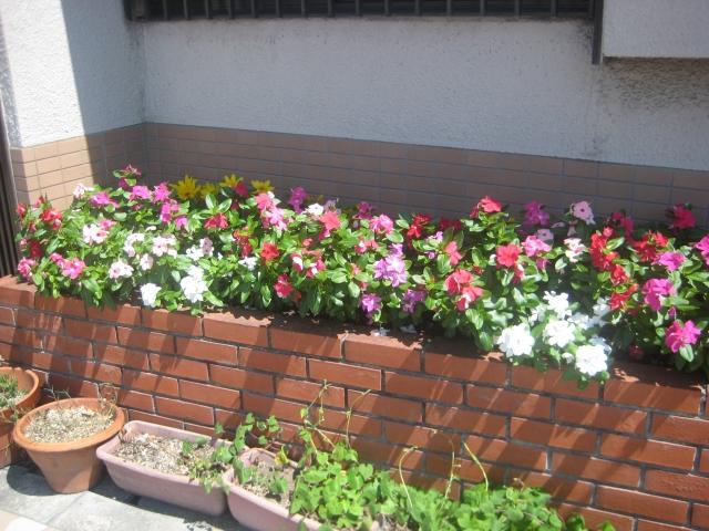レンガ花壇