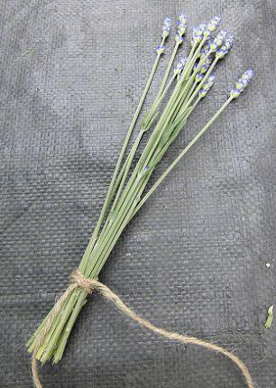 収穫したラベンダー