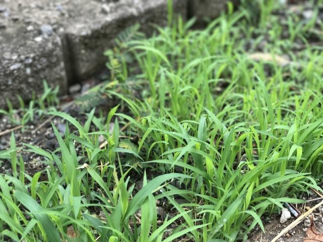 繁茂する雑草