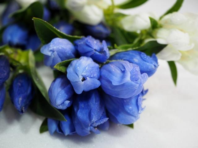 リンドウの花束