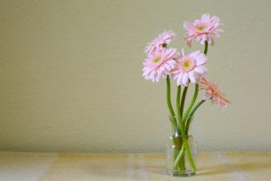 ピンクのガーベラの花