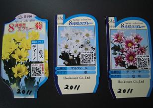 8月咲き菊苗ラベル