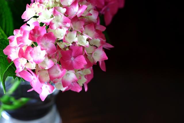 花瓶のアジサイ