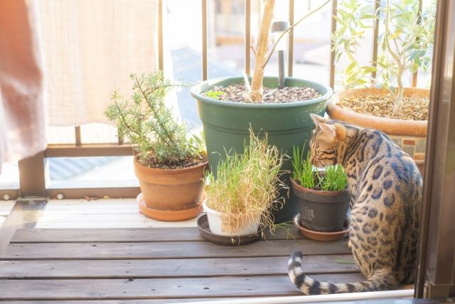 猫と鉢植え