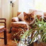 猫とオリヅルラン