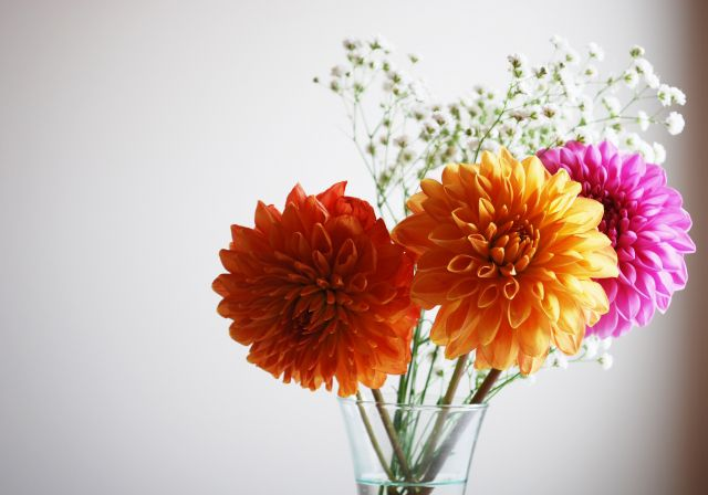 花瓶にいけた花