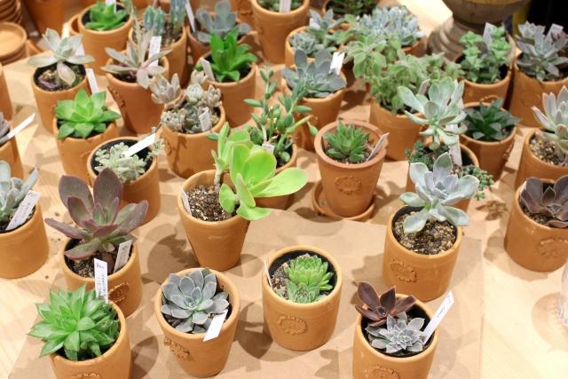 多肉植物の品種