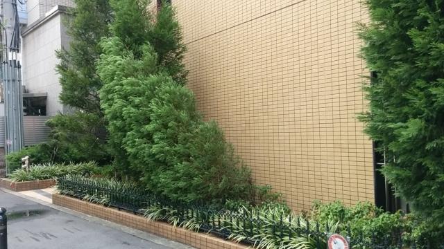 強風で倒れた樹木