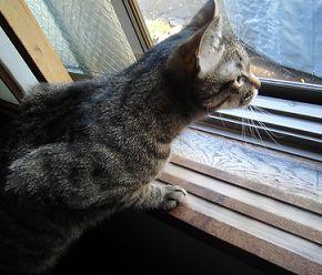 我が家の飼い猫