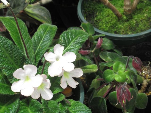 鉢植えの防寒対策