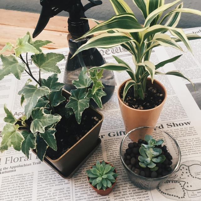 鉢植えの防寒