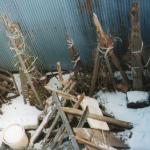 我が家の昔の雪囲い