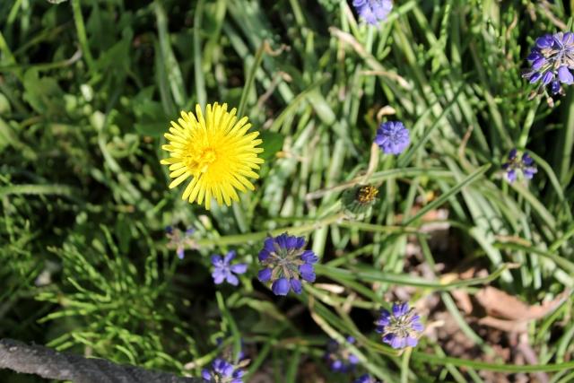 花壇の雑草