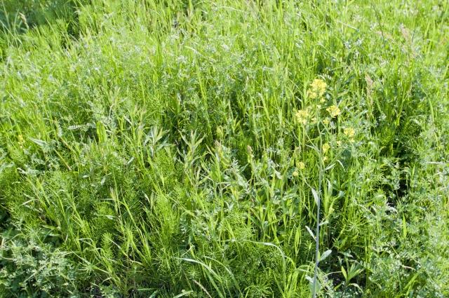 雑草だらけの庭