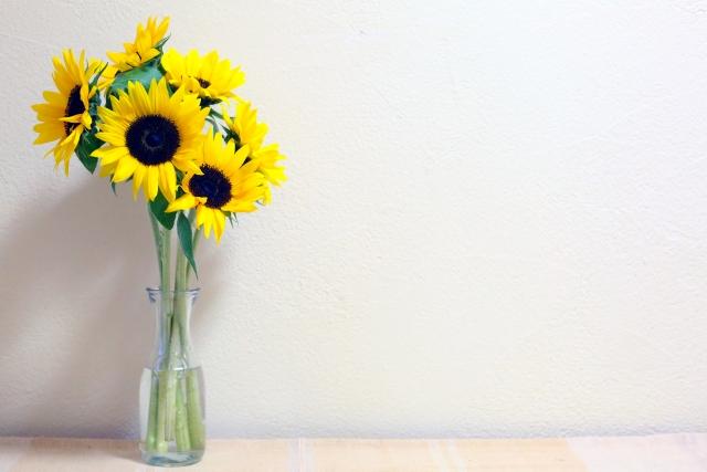 ヒマワリの切り花