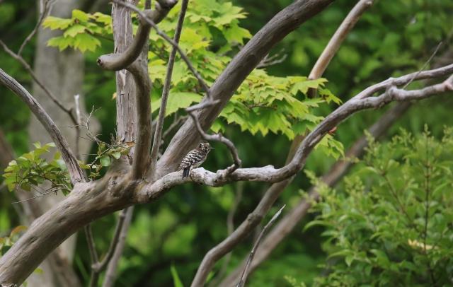 サルスベリの枝