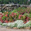 来春に向けた庭の計画。花壇の色使いのポイント