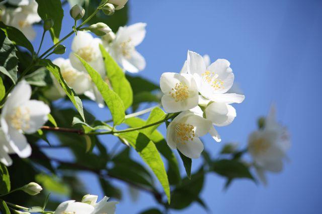 庭木の花が咲かない