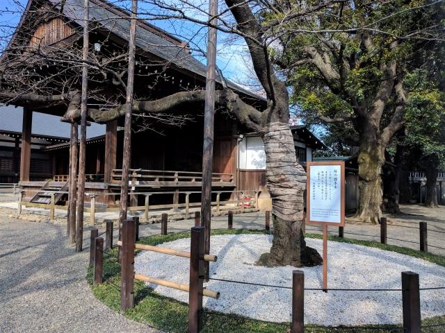 靖国神社の桜標本木