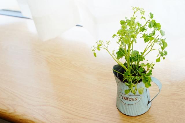 100均の用土で植え付け