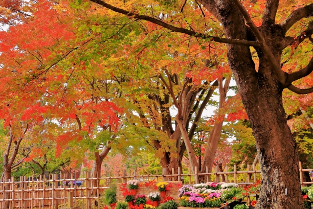 弘前公園の紅葉と菊の花