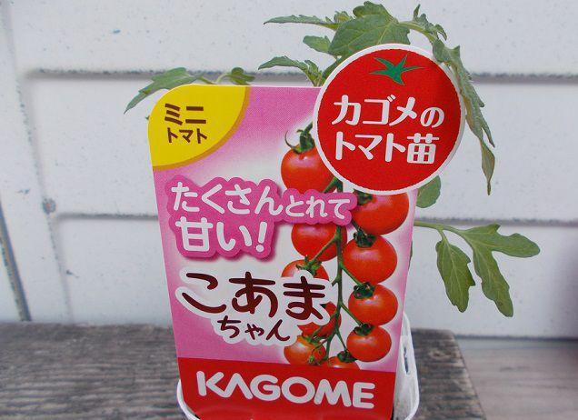 カゴメのミニトマト苗